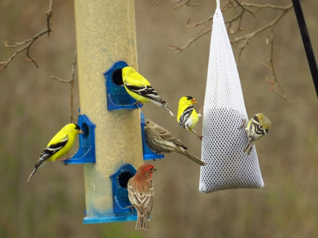 The finches approve.